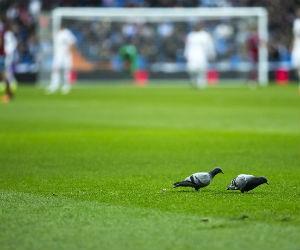 Wedtips voetbal Getty